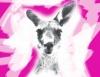 Die Känguru-Chroniken. Das Theaterstück von Marc-Uwe Kling