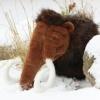 Steinzeitwerkstatt Suche das Mammut