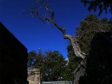 Burg Teck im Sommer